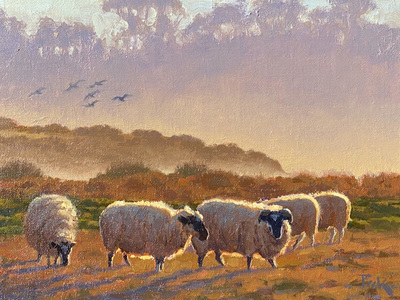 A flock of birds fly over sheep grazing in a field, backlit by the setting sun, at Mission Ranch in Carmel, California.
