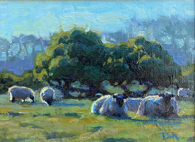 Sheep resting in the afternoon sunlight at Mission Ranch in Carmel, California