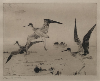 Title: Three Yellowlegs , Size:  4.5 x 6 , Medium: Drypoint etching , Price: $3,750