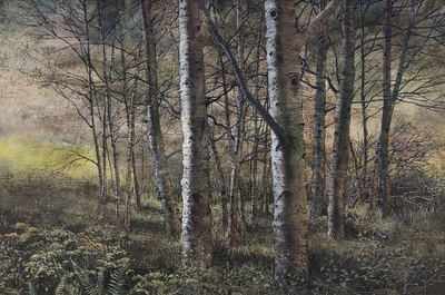 A detailed, realistic watercolor depicting a forest of birch trees in fall.