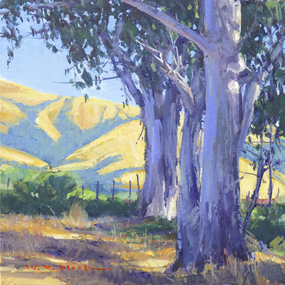 Dappled morning sunlight filters though large eucalyptus trees, with rolling golden hills in the distance.